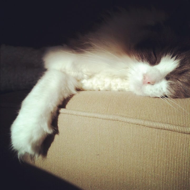little girl ragdoll sleeping