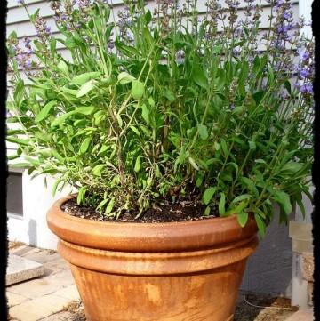 Container Garden Mini-Series: Fertilizer