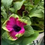 Container Gardening Mini-Series: Water