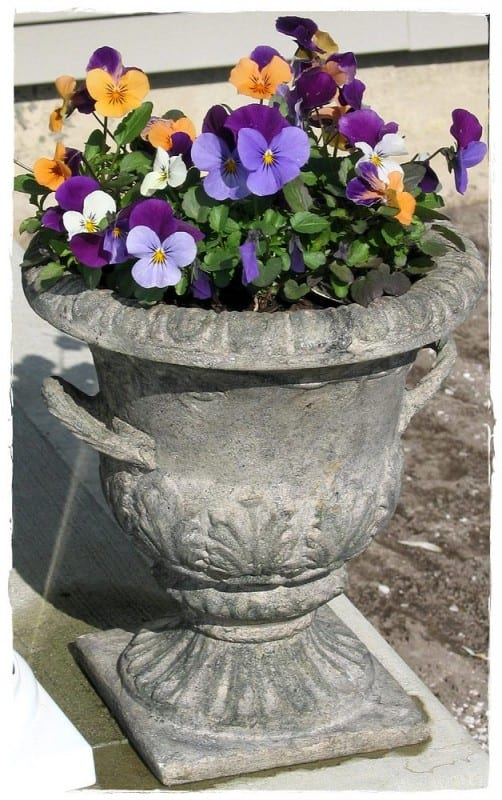 Container Gardening Mini-Series: Commitment
