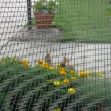 rabbits in the front garden