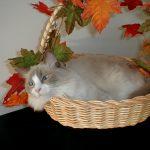 Easy last-minute Thanksgiving decor ideas!