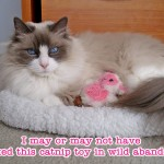 Crazy Cat Lady status: I'm well on my way!
