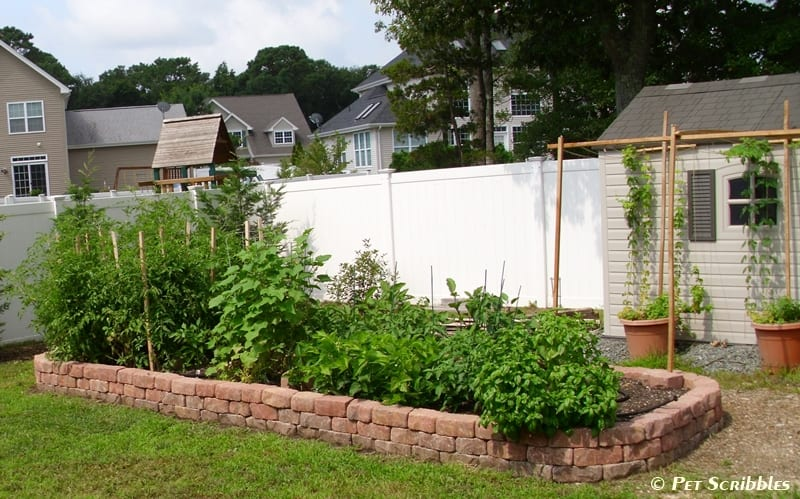 Build a raised garden bed for vegetables!