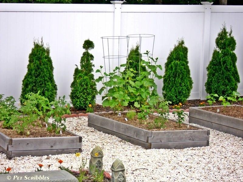 raised cedar beds vegetable gardens
