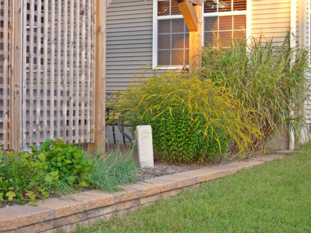 When ornamental grasses outgrow their space...