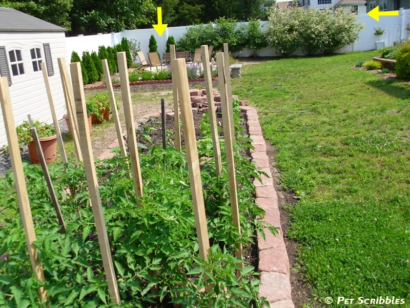 Use wooden stakes to help support larger vegetable plants.