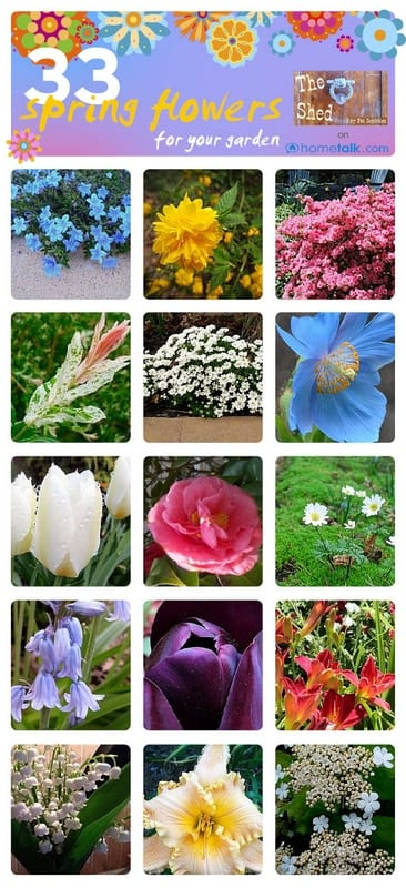 33 Must-Have Spring Flowers for your Garden