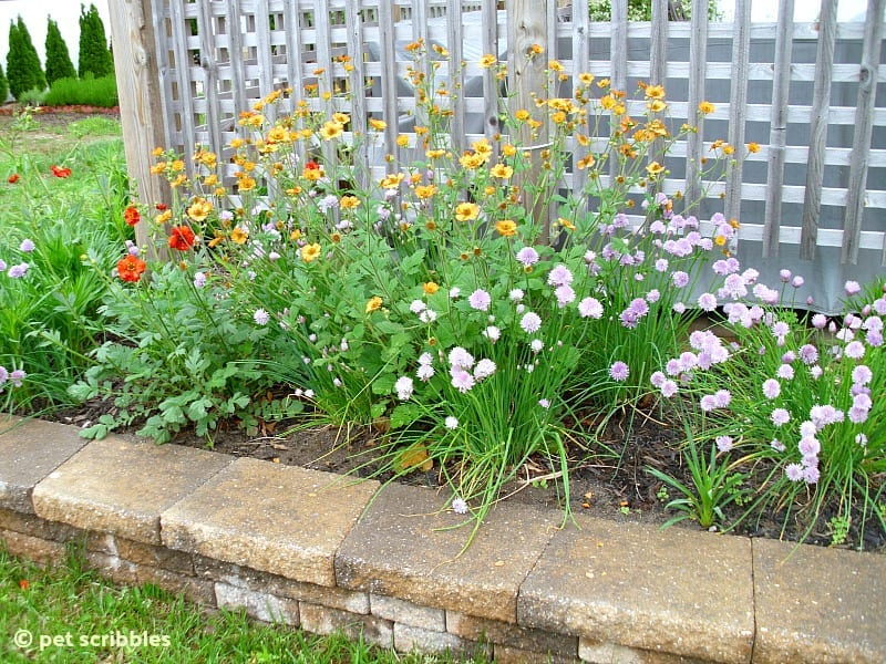 Geum Avens and Ornamental Onions