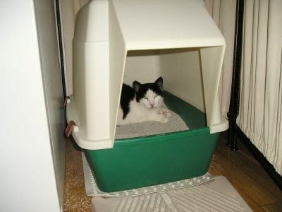 Aliza trying to hide in the litter box and get some sleep.