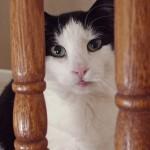 Loving a Feral Cat named Aliza