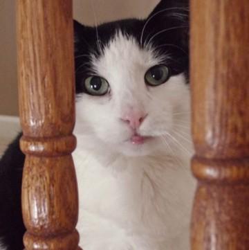 Loving a Feral Cat Named Aliza | Pet Scribbles