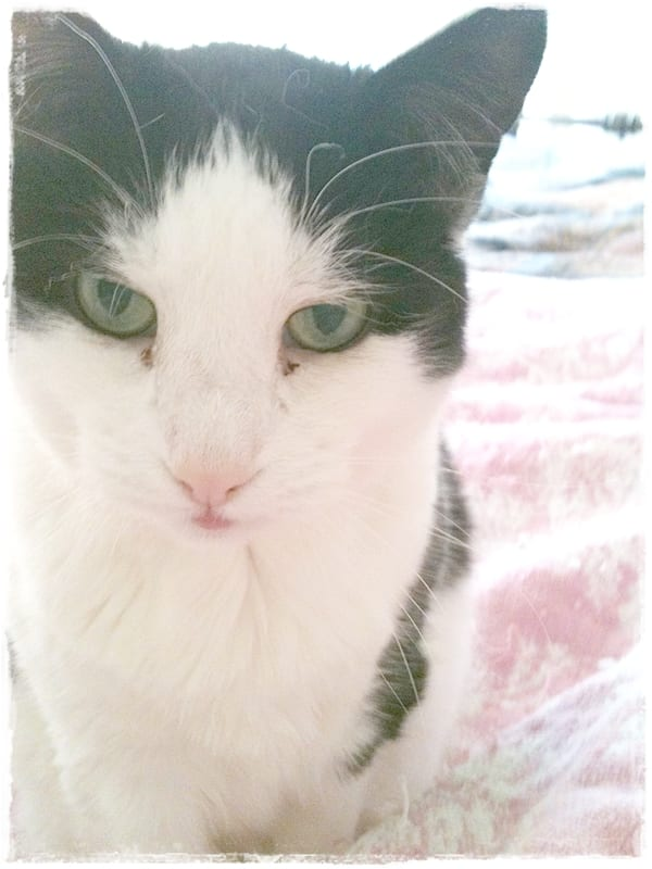 Saying Goodbye to a Feral Cat Named Aliza - Pet Scribbles