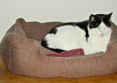 Aliza snoozing in her favorite bed!