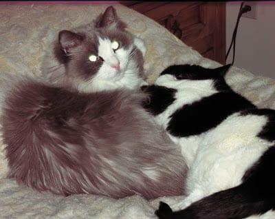 Aliza never left Boober's side when he got sick.