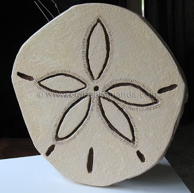 Giant Sand Dollar DIY | Crafts By Amanda