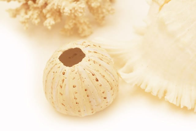 Homemade Plaster Clay Sea Urchin DIY | Twigg Studios