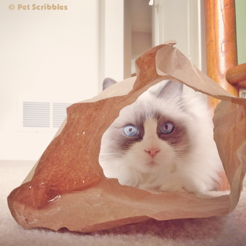 Lulu loves a good paper bag. I cut the bottoms out for her.
