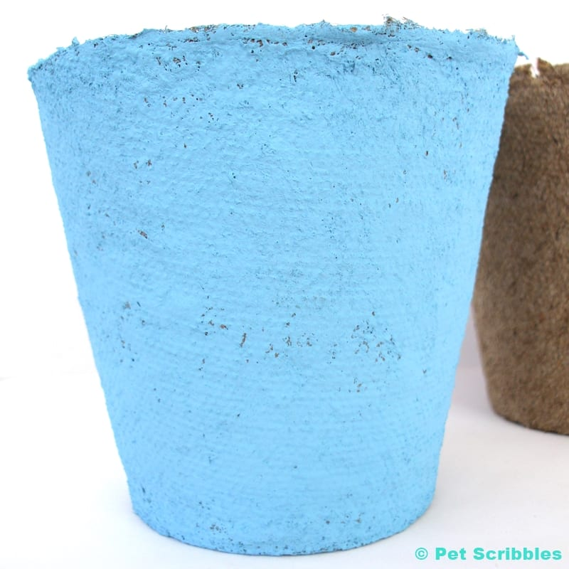 peat pot painted with blue chalky finish paint