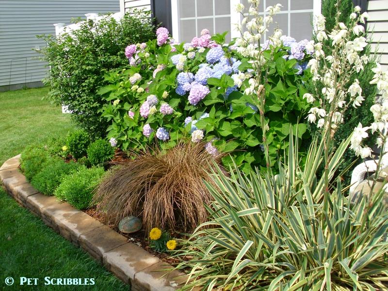 Toffee Twist Ornamental Grass in the garden in Summer!