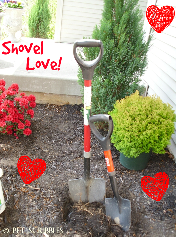 I'm in love with a shovel! Why my petite garden shovel is such an essential gardening tool.