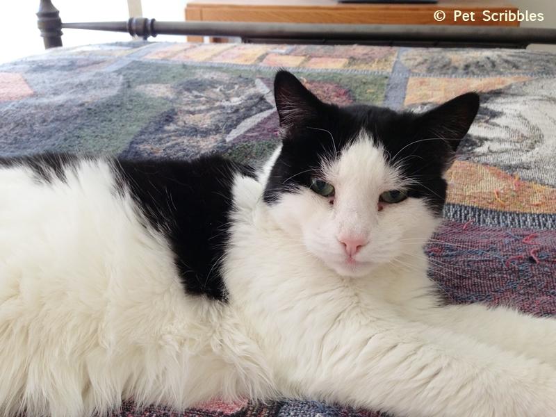 Aliza-sweet-feral-kitty