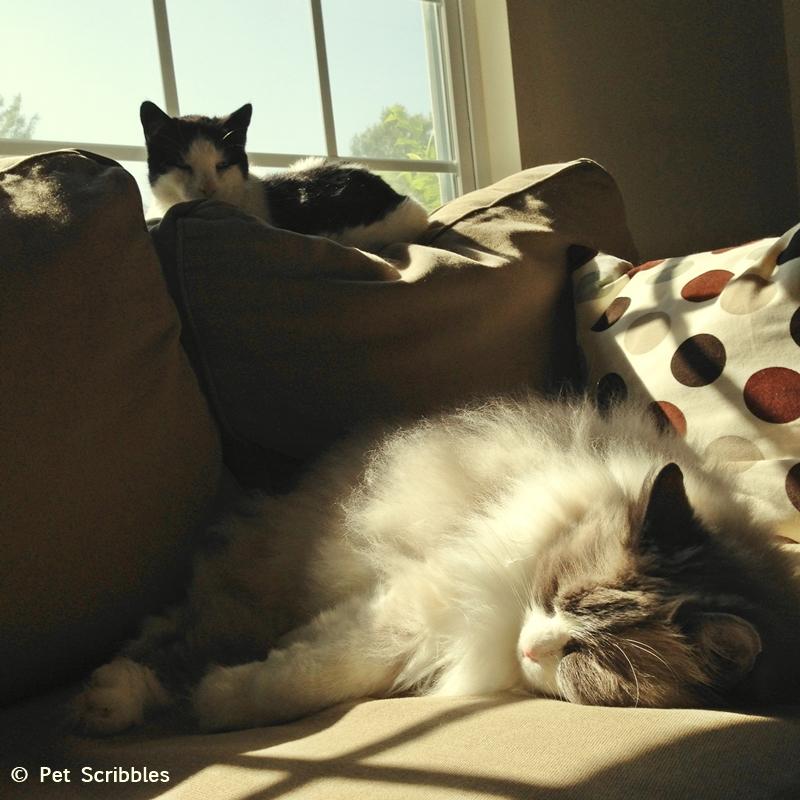 Aliza and Lulu enjoying the sun patches!