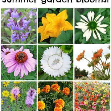 Summer Garden Blooms up close!