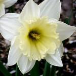 Thursday Blog Links, March 22, 2012