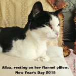 Saying Goodbye to a Feral Cat Named Aliza