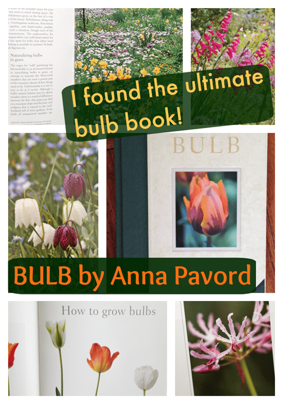 Bulb by Anna Pavord - the ultimate book about bulbs!