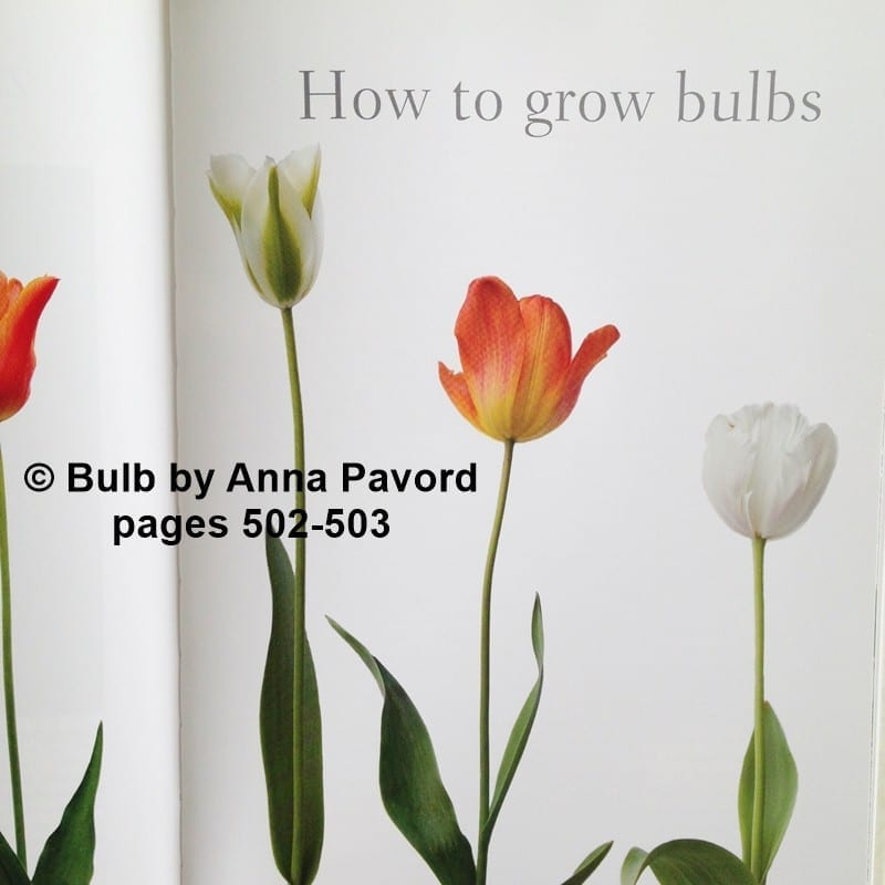 pages 502-503, Bulb by Anna Pavord