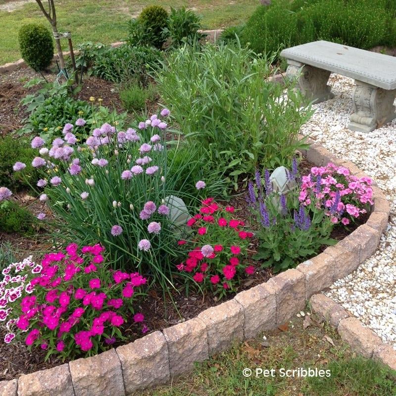 gardening in early June