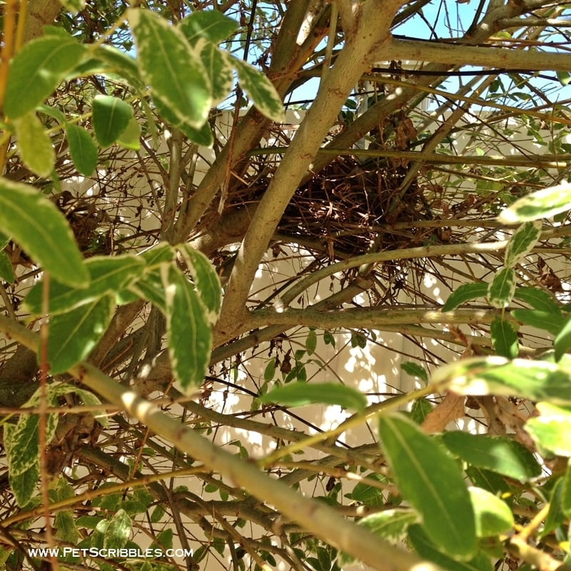 bird nest in dappled willow