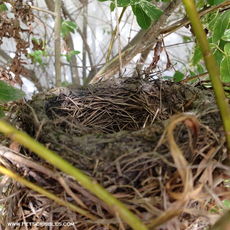 bird nest up close