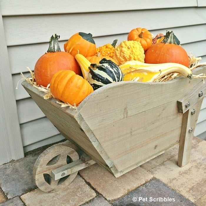 vintage wheelbarrow and gourds