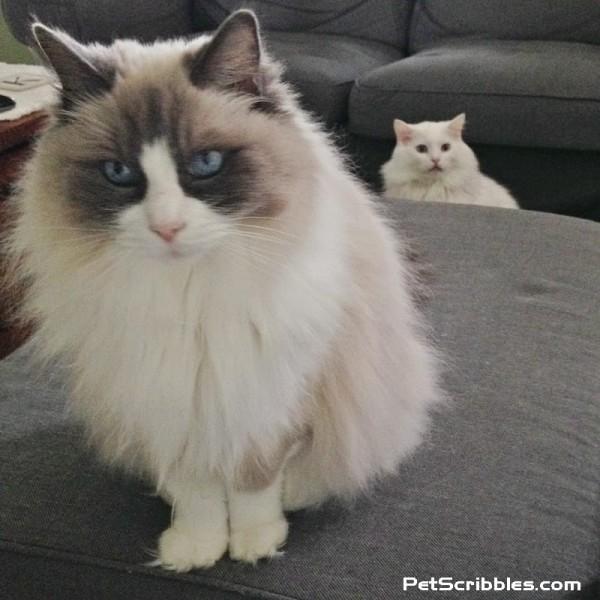 Lulu and Otto