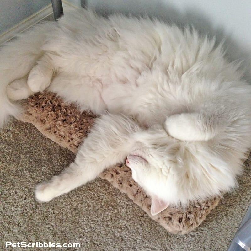 Otto sleeping