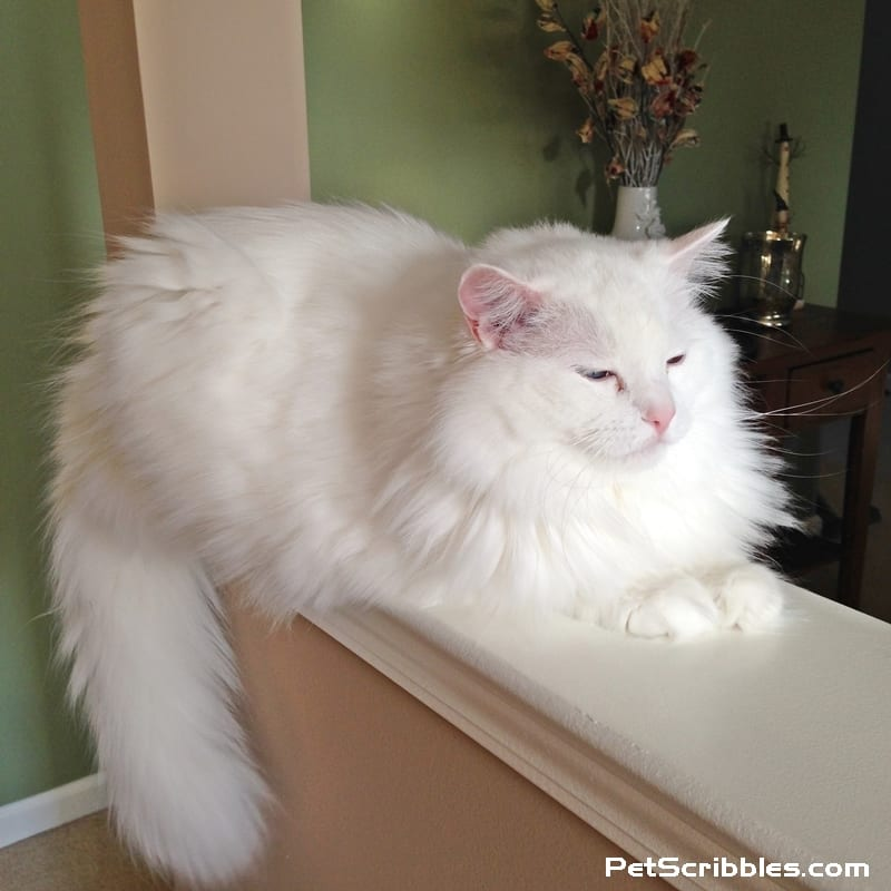 Otto zen kitty