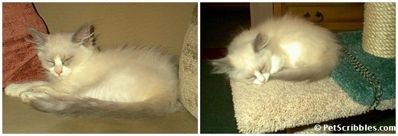 Don't wake a sleeping cat!