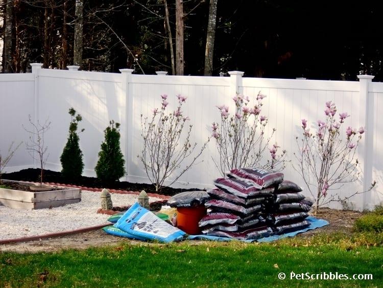 Magnolia Janes planted April 2010