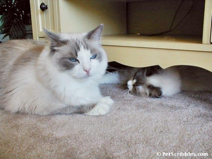 Matisse letting Lulu sleep-9-6-2002