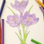 Vintage Crocus Coloring Page for Free!