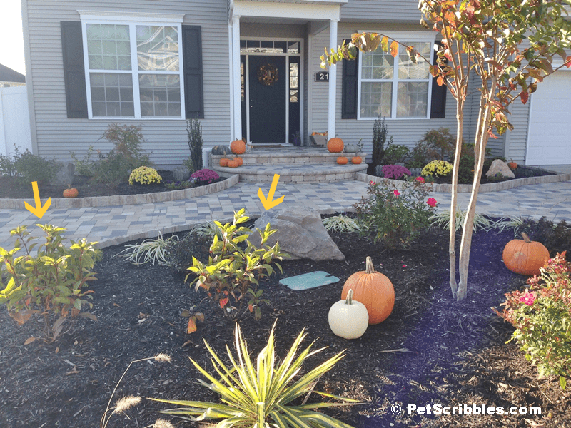 Pet Scribbles front landscaping