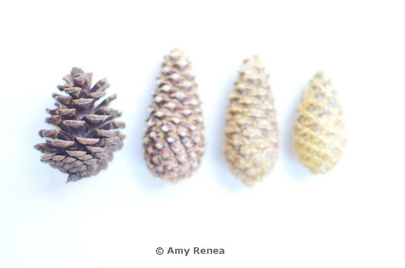 DIY Pinecones Bleaching from the book Crafting with Nature