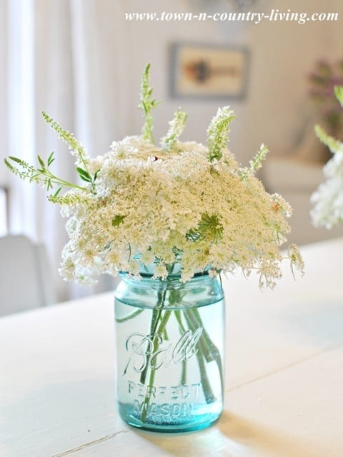 Queen Annes Lace from Town and Country Living