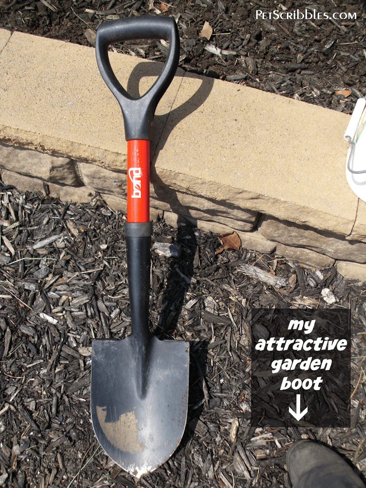 Why my petite garden shovel is such an essential gardening tool.