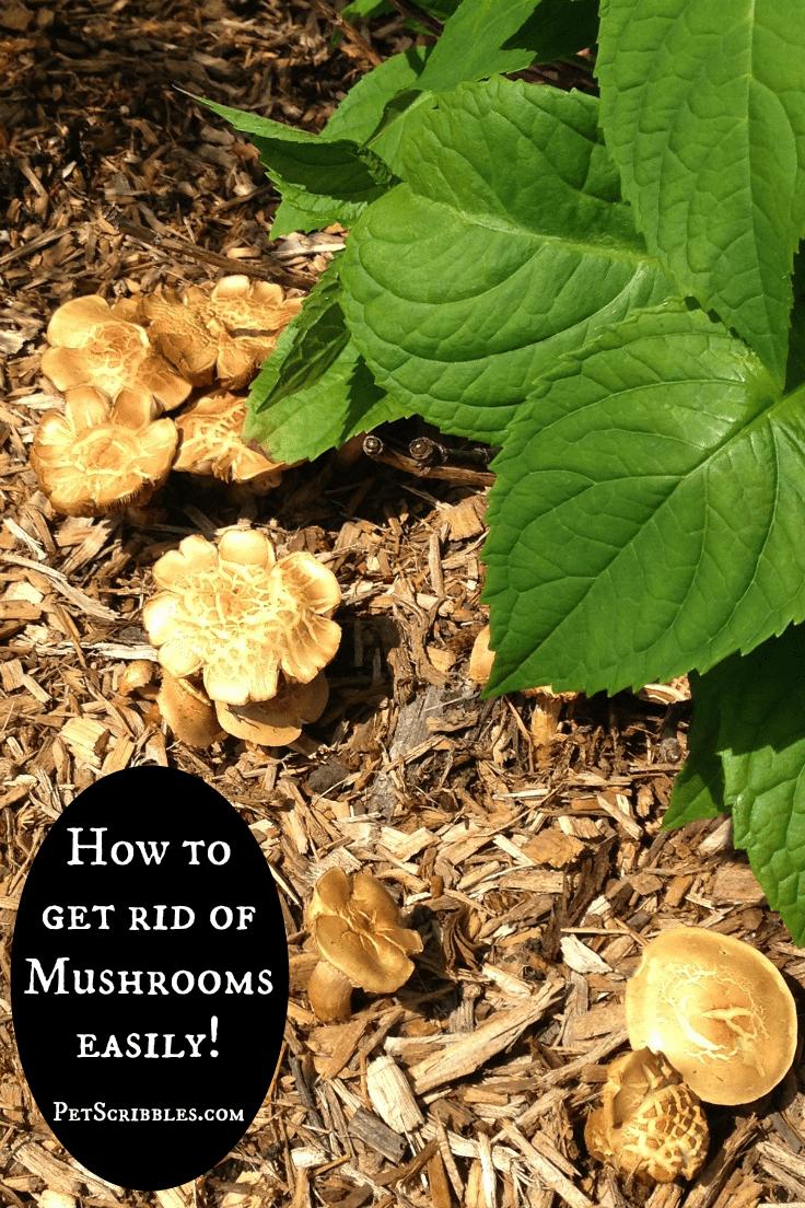 get rid of mushrooms easily
