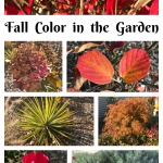 How to get brilliant Fall color in your garden: Part Two
