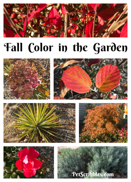 How to get brilliant Fall color in your garden
